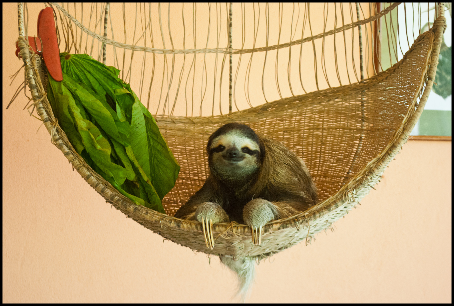Sloth Sanctuary Never Done That